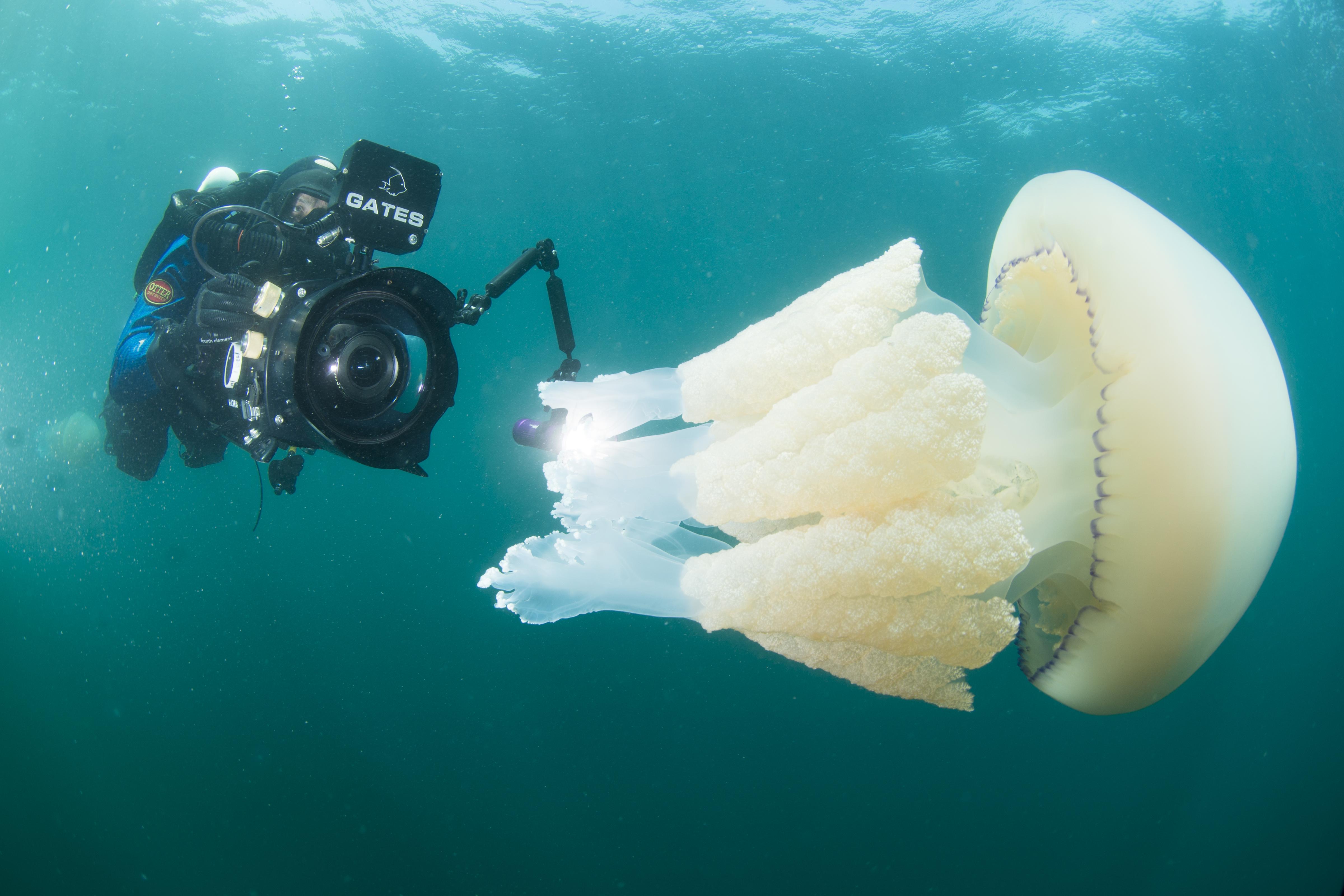 rich stevenson filming underwater