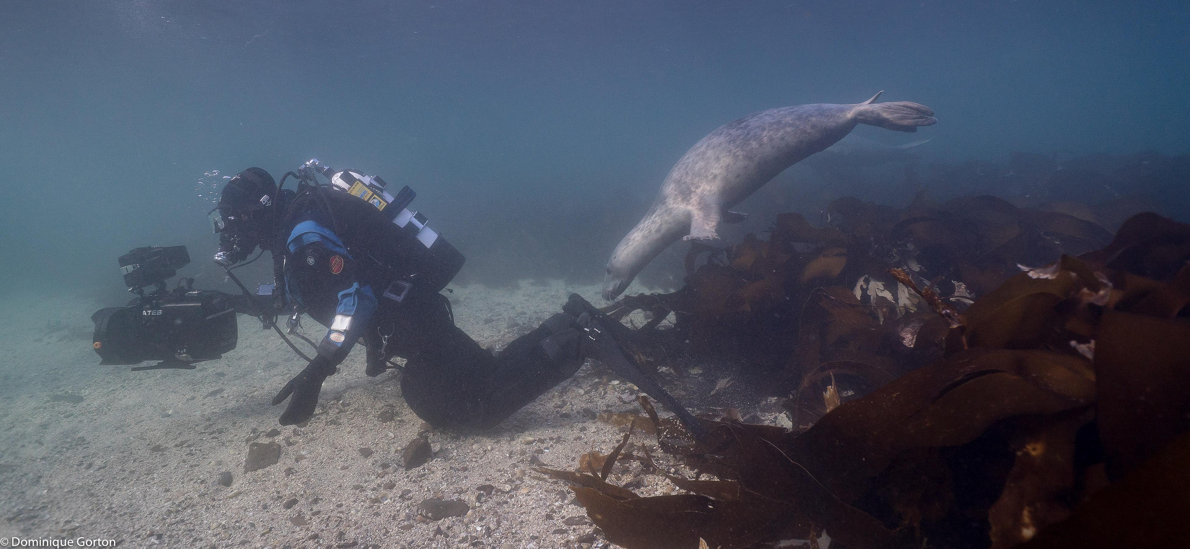 Underwater filming by Rich Stevenson