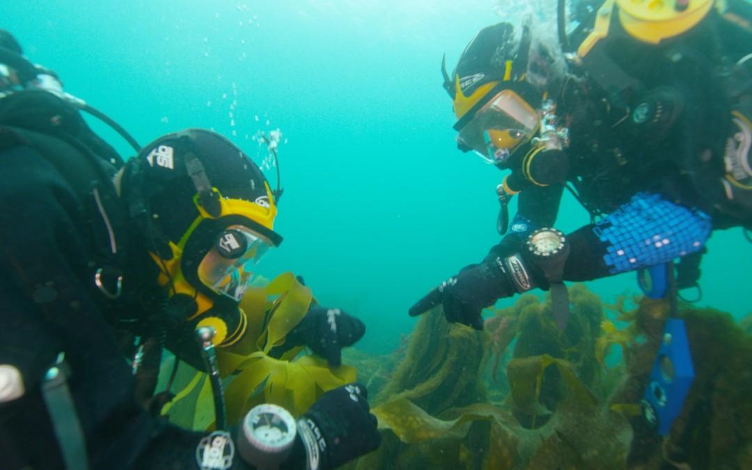 Underwater filming in the UK